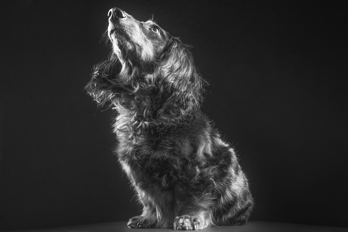 black and white portrait of a dog