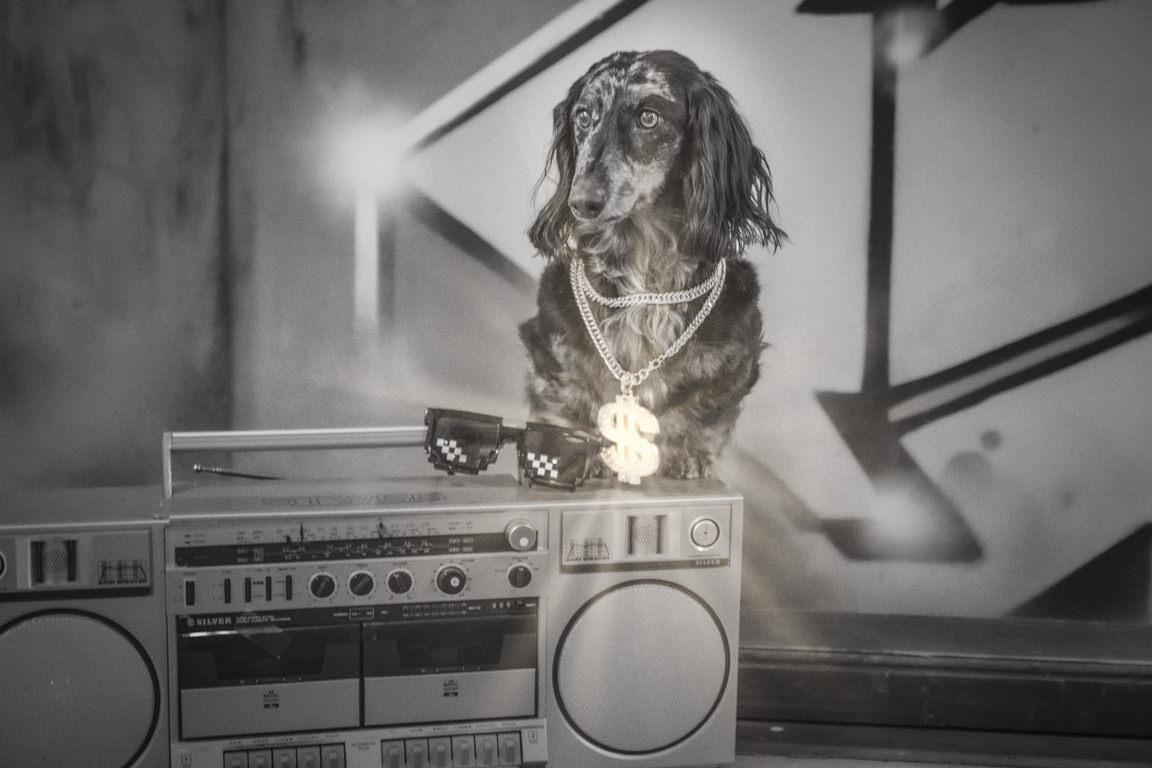 dog against graffiti