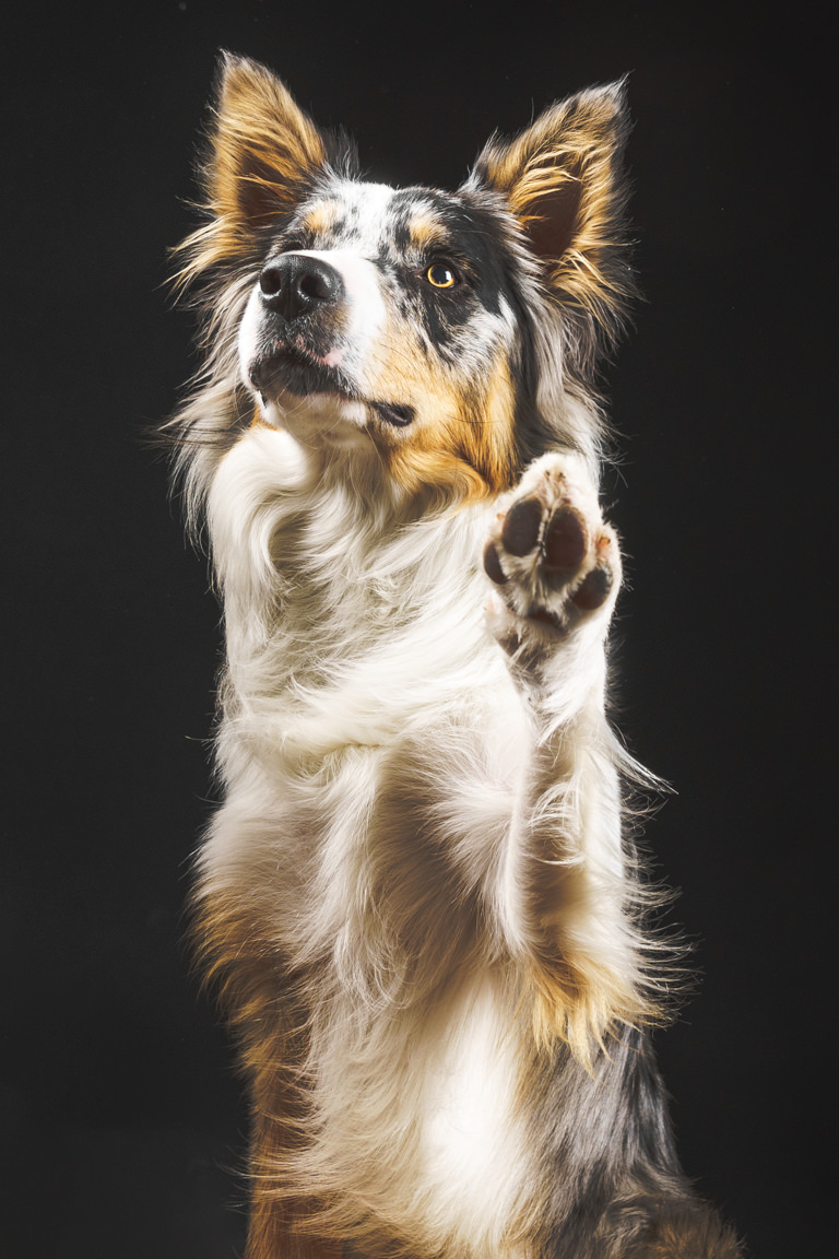 dog waving
