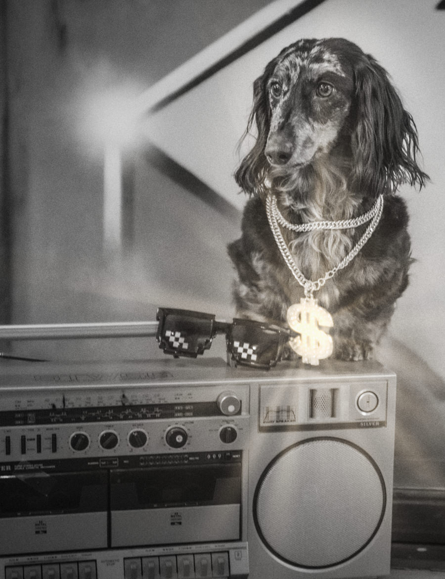 dog with bling posing on boombox