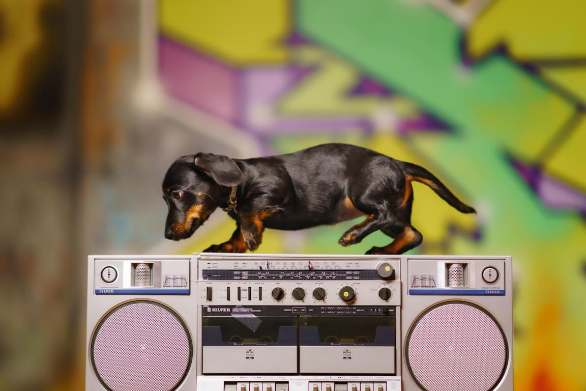 Dachshund puppy on boom box at SNAP Foto Club