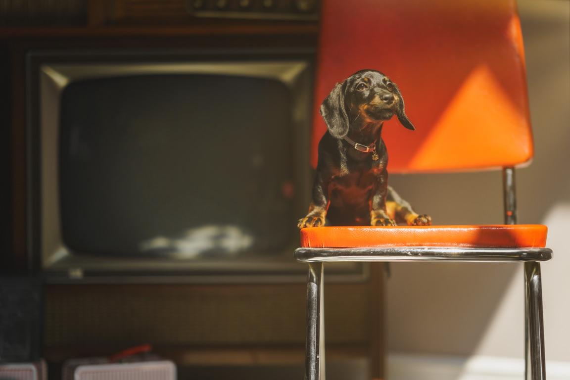 Retro Dachshund puppy at SNAP Foto Club