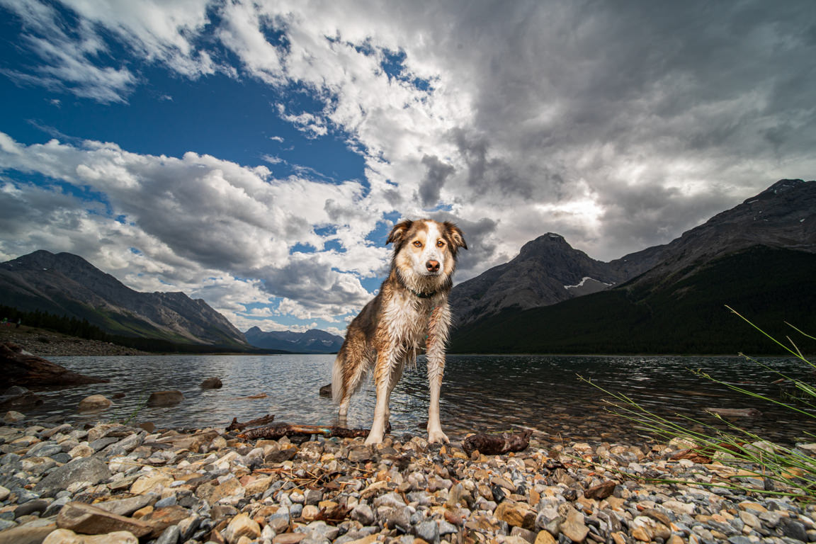 Dog in Spray Lake by SNAP Foto