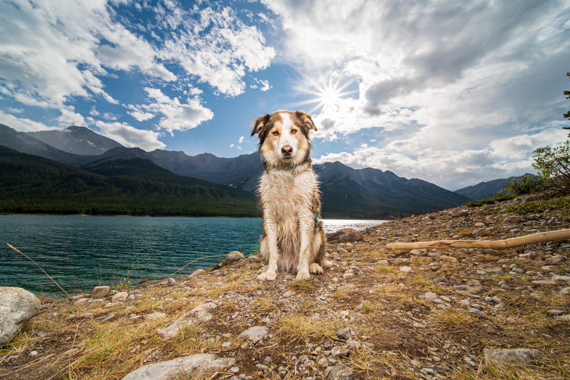 Dog with sunstar at Spray Lake by SNAP Foto